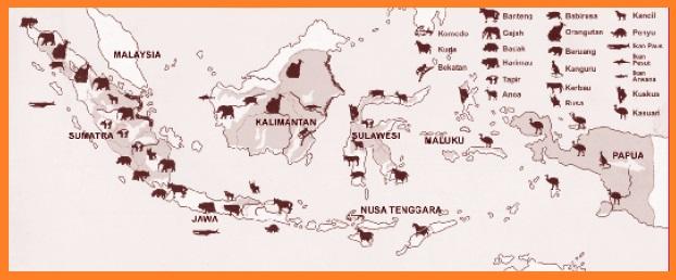Persebaran Flora Dan Fauna Di Indonesia Flora Dan Fauna Kontinen Asia Australia Wallace
