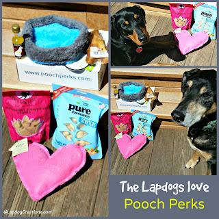 doberman mix rescue dog pooch perks subscription box
