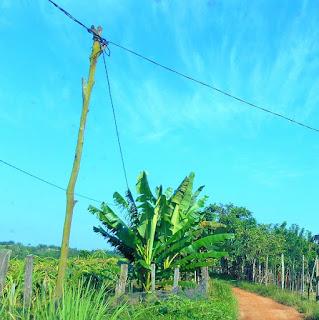 perkebunan warga membuka akses menuju batu dinding Borneo