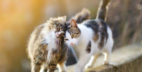 Comment comprendre ce que votre chat vous dit