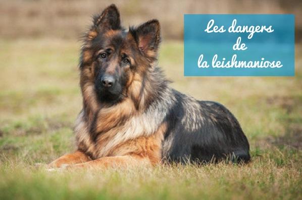 Dogteur: La leishmaniose, une maladie parasitaire parfois mortelle