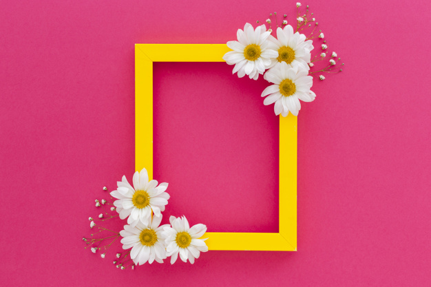 Yellow frame decorated with white daisy and baby's breath flowers over the pink surface Free Photo