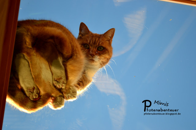 Katze Mimi wirft vom Dach aus einen Blick durch das Glasfenster