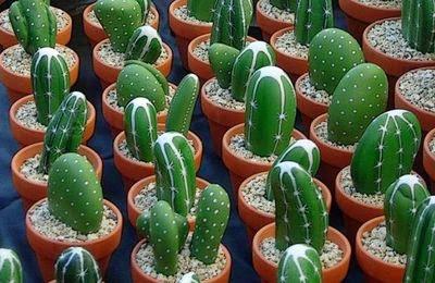piedras, rocas, decoración, pintura, Tutorial de Artesanía, cactus