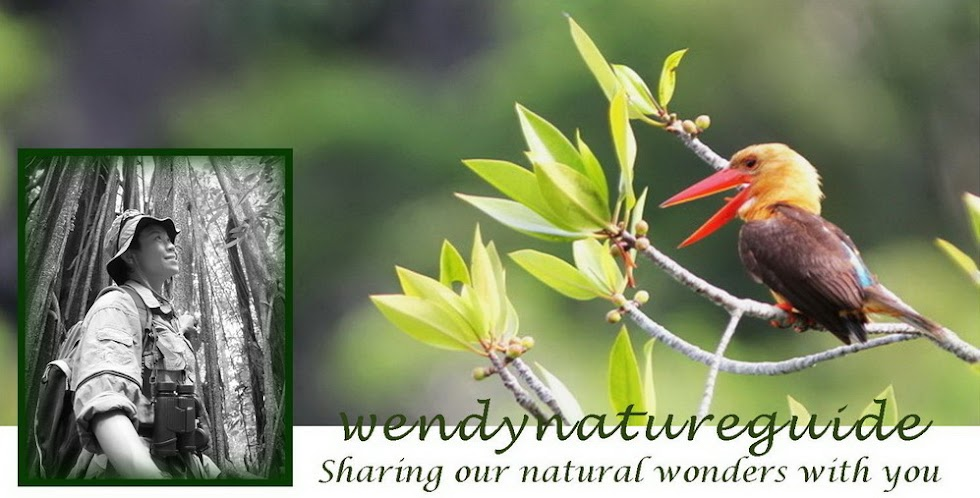 Wendy Nature Guide