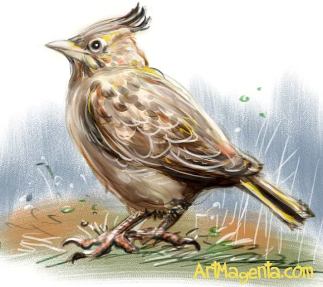 Crested Lark sketch painting. Bird art drawing by illustrator Artmagenta