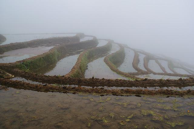 Rizières en terrasses inondées