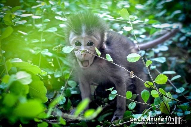 Cría de mono abandonada