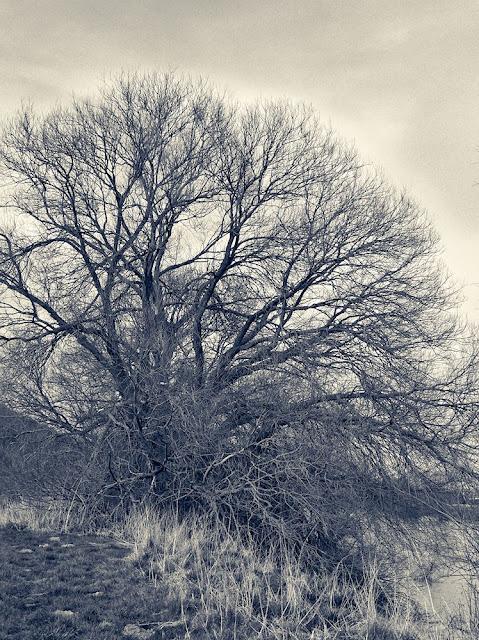 Ein einzelener Baum in schwarzweiß