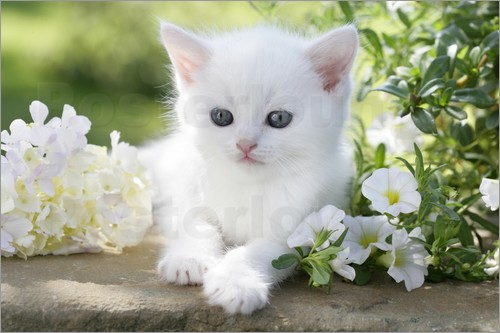 White Cat Image with Flowers