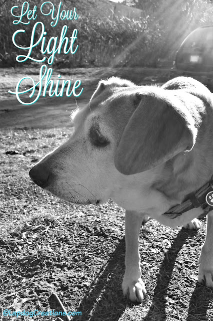 senior hound mix dog let your light shine