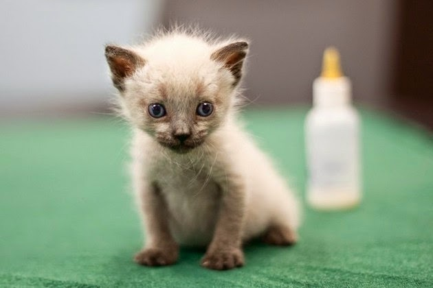 tiny-kittens-pictures-2