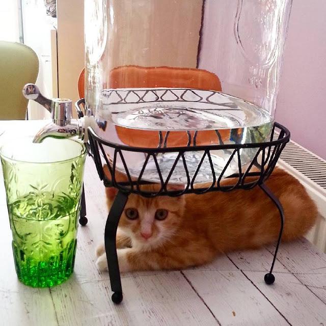 kedi beslemek