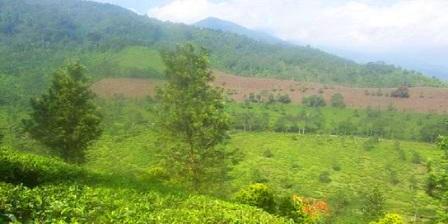 Taman Riung Gunung taman riung gunung di puncak taman riung gunung penginapan taman riung gunung