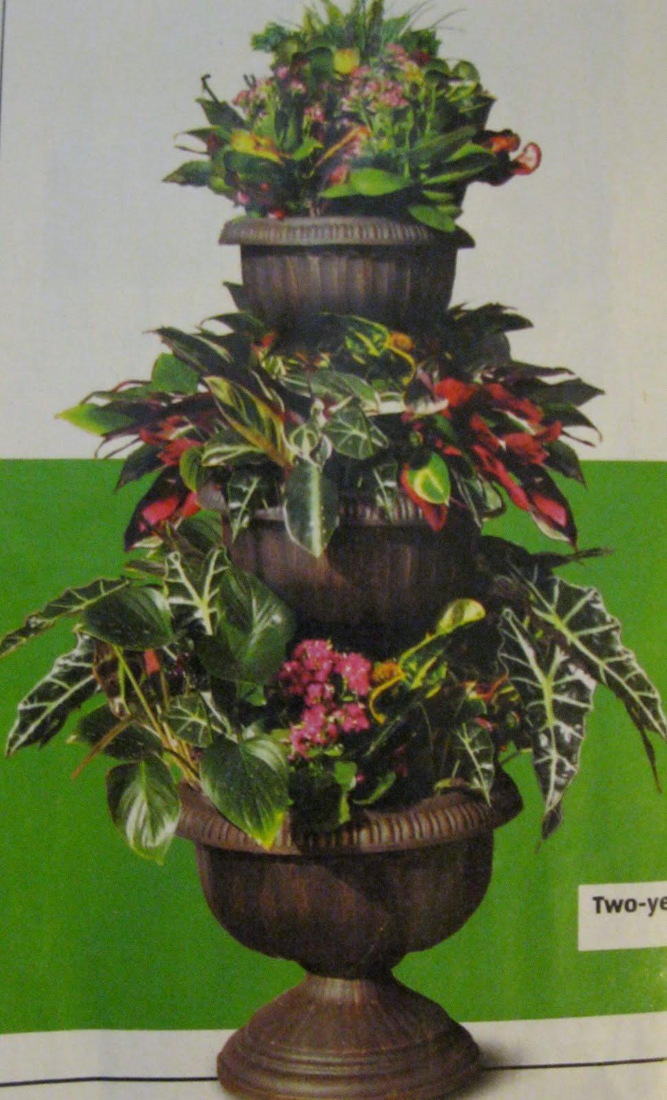 3 Tier Planter Aldi : planter, Helping, Save:, Prices, Starts, Some)
