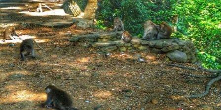 taman narmada wikipedia taman narmada bali raja taman narmada tempo dulu taman narmada dimana taman narmada
