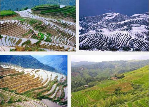 Rice field China