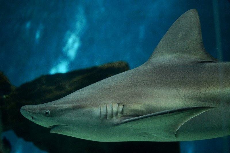 acquario village genova squali