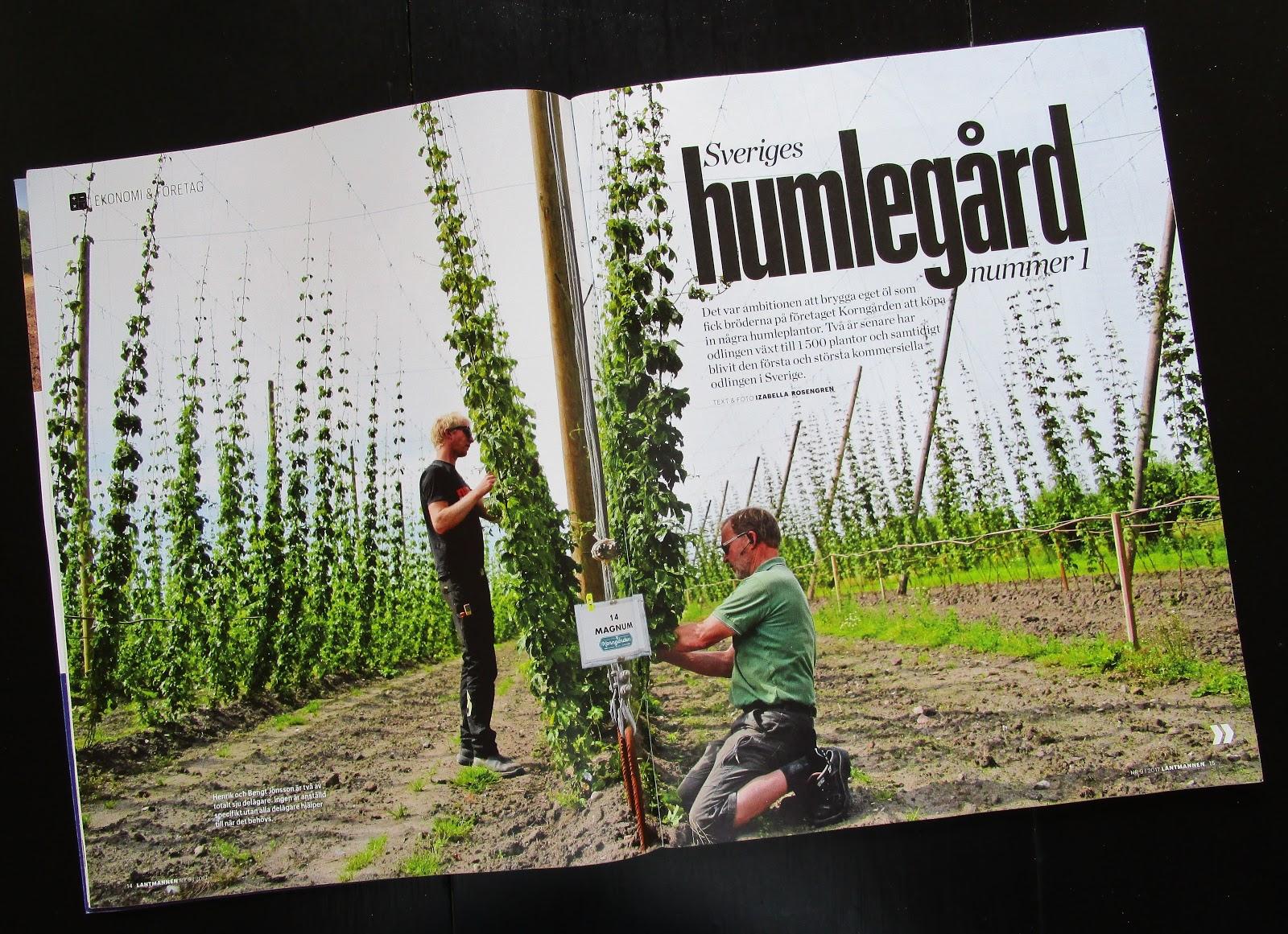 3cf9e5c5186 ... bröder fick idén att skaffa några humleplantor för att börja brygga.  Efter två år har de 1 500 plantor och den största kommersiella odlingen i  Sverige.