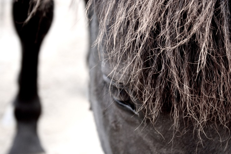 .horses