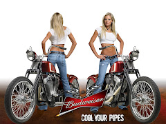 Budweiser Wallpaper Girzl