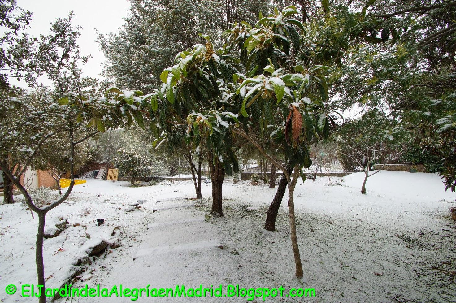 El jard n de la alegr a mi jard n sigue nevado for El jardin de la alegria cordoba