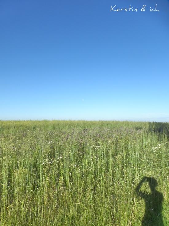 Feld Wildblumen Blauer Himmel Landschaft im Hunsrück