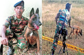 International Award For Sri Lanka Army's Mine Detection Dog, Alvin