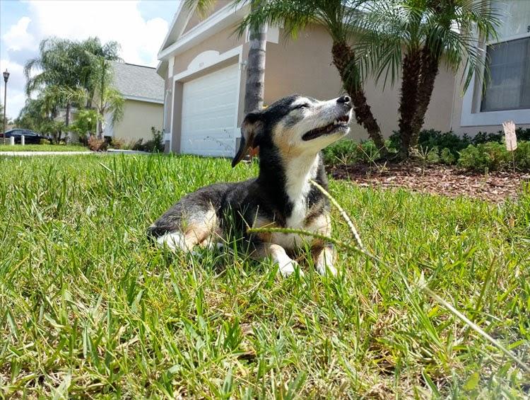 Senior Dog Enjoys The Sunshine