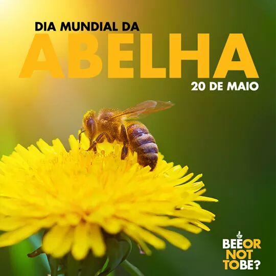 Resultado de imagem para dia mundial da abelha