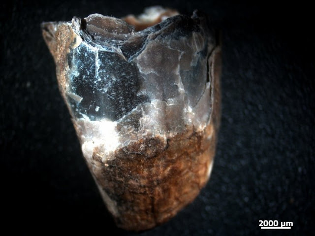 Original dinosaur claw sheath proteins preserved for 75 million years