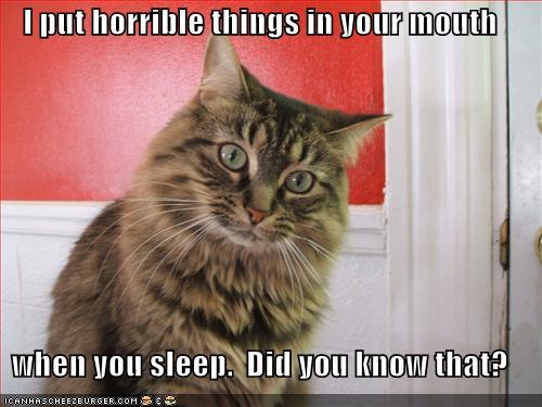 Cute Fat Cat Wallpaper Entertainment World Horrible Cat