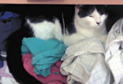 A cat asleep on a pile of washing
