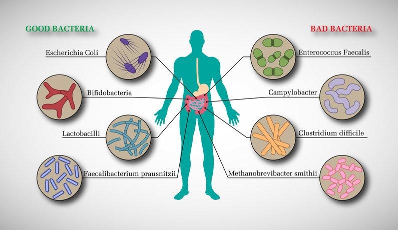 Risultati immagini per microbiota intestinale