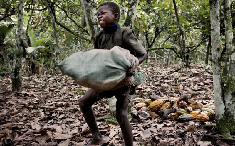 Criança trabalha em plantação de cacau