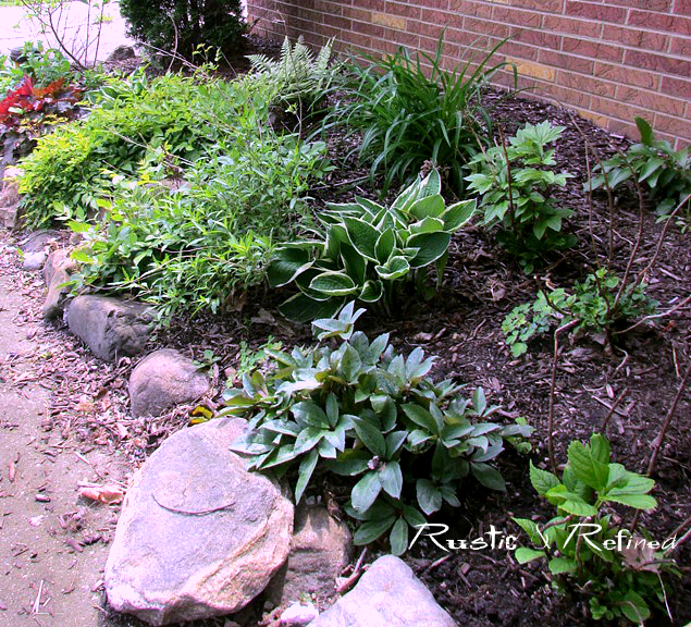 Creating a shade garden with interest and color