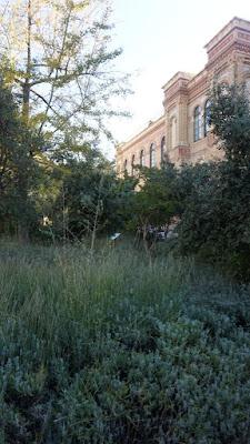 Jardín del Museo de Ciencias Naturales