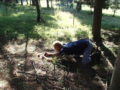 grzyby w sierpniu, jadalne grzyby w sierpniu, grzyby 2016, grzyby na Orawie, bacówka, sery góralskie, oscypki, bundz, żętyca