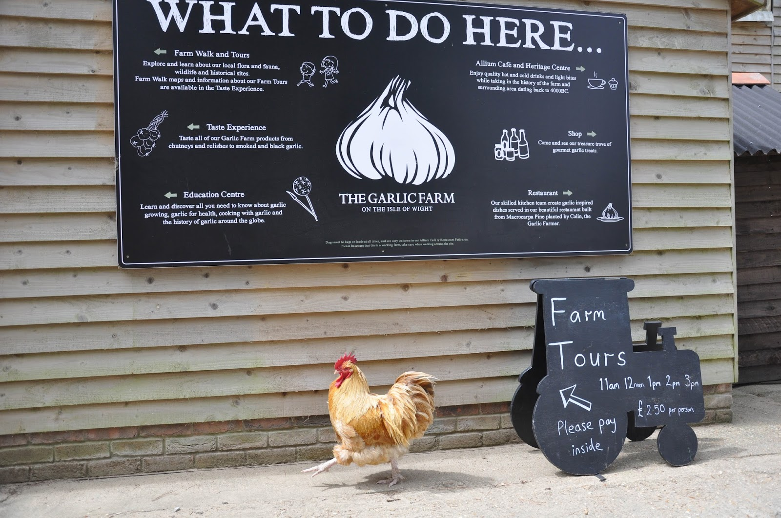 Rooster on the farm, The Garlic Farm, Isle of Wight, UK