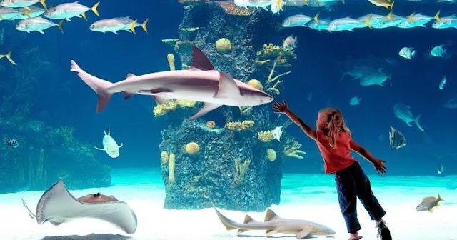 Best Aquariums in the USA: Newport Aquariums