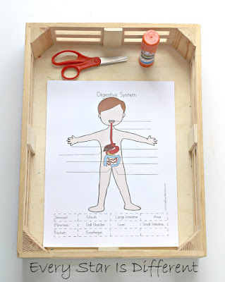Parts of the digestive system cutting activity (free printable)