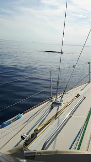 Πτεροφάλαινα έκανε την εμφάνιση της έξω από το λιμάνι της Σύρου
