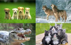 Contoh hewan karnivora pemakan daging