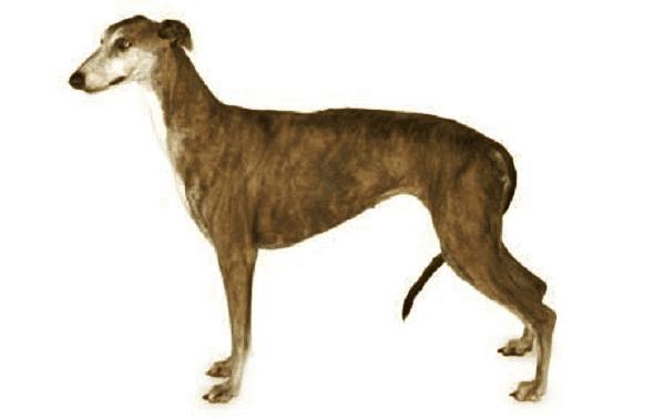 adopting a greyhound trust