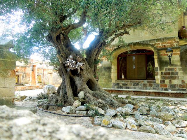 finestra,albero,sassi