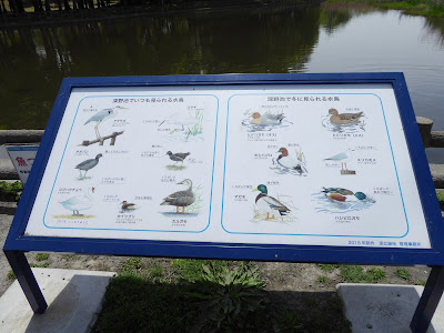 深北緑地公園 ★深野池でいつも見られる水鳥  ★深野池で冬に見られる水鳥