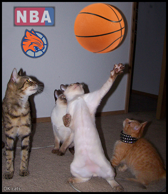 Photoshopped Cat picture • NBA Kitties in action • They're so fast and Pawesome!