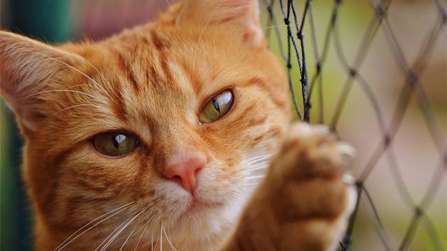 La ciencia alerta: darle un beso a su gato puede matarle