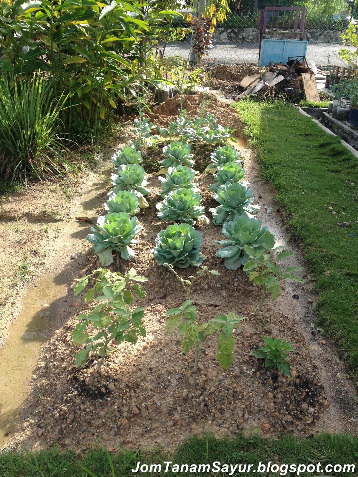 Jom Tanam Sayur Jts Kebun Tepi