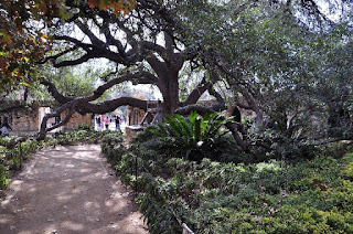 walkway to the Alamo well under a large live oak tree